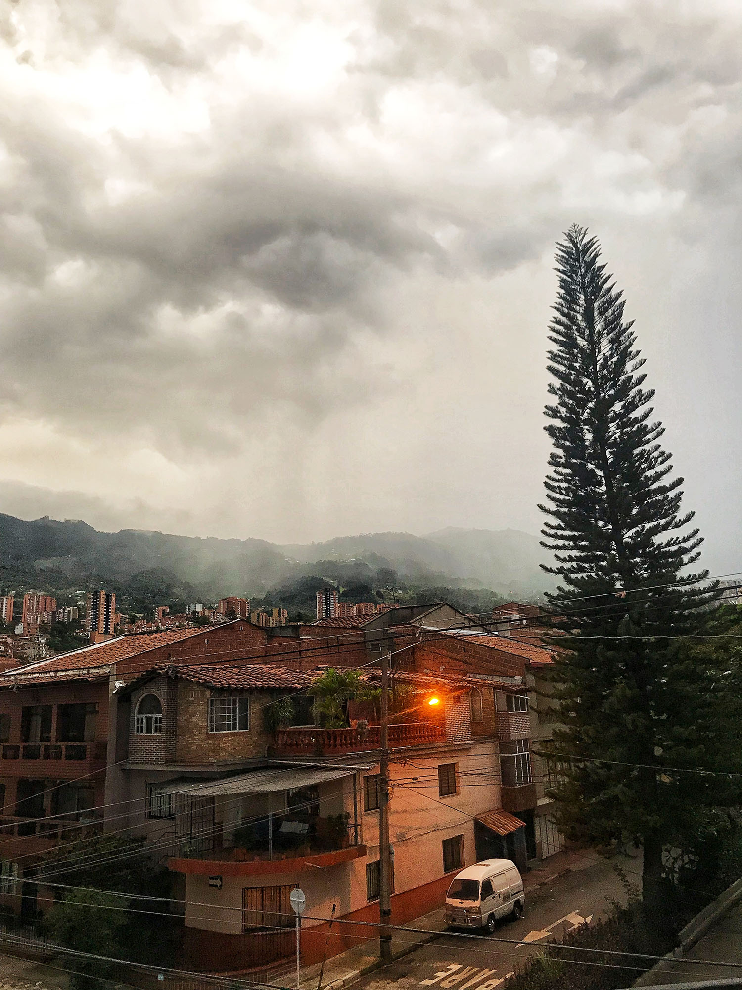 Storm clouds over rooftops with a giant pine tree in the middle