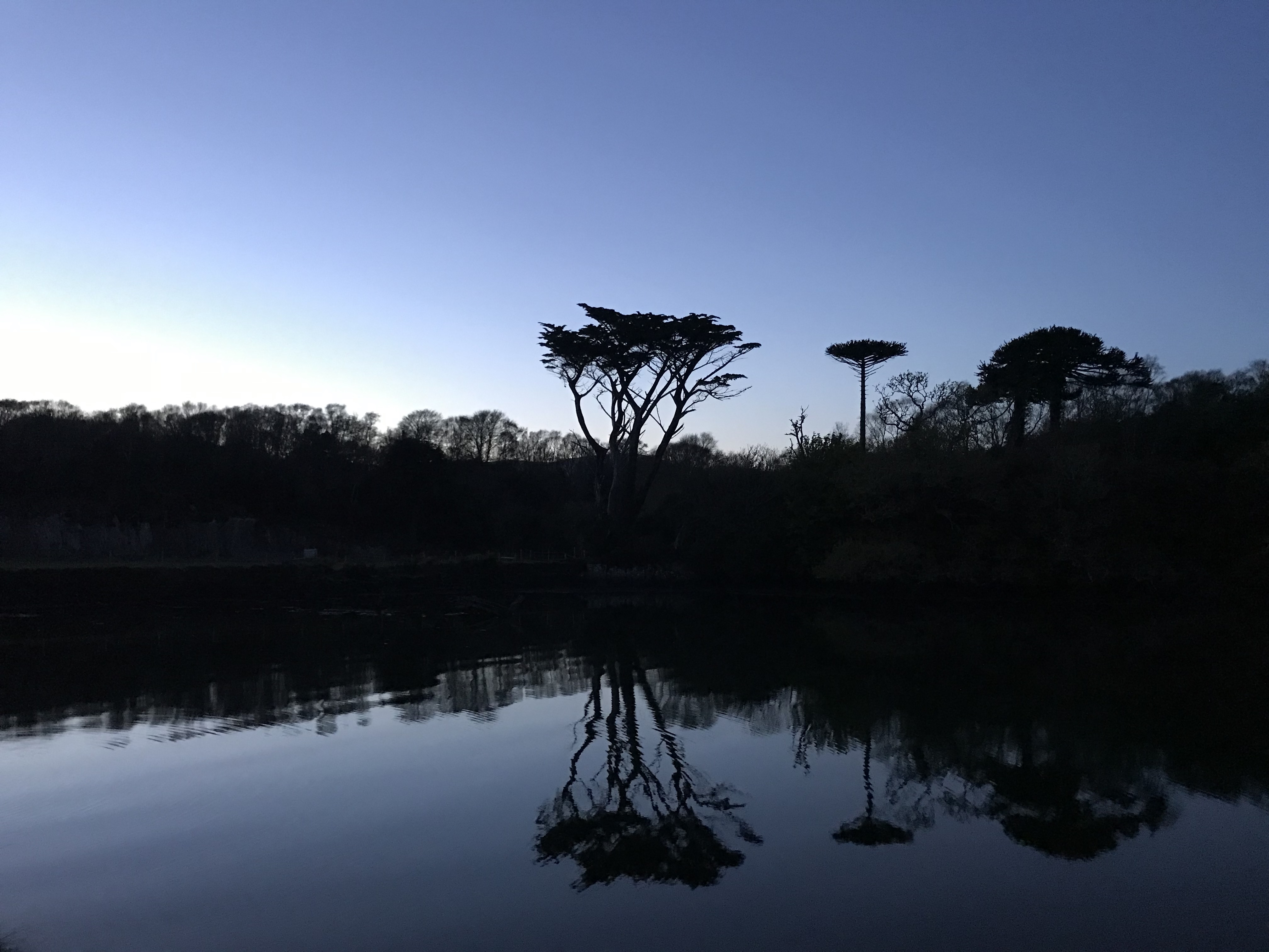 Twilight sky with a reflection of big trees on a still pond of water