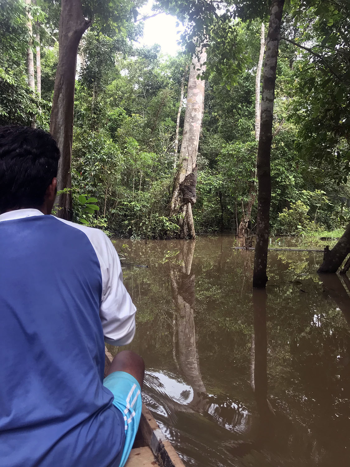 local guide in a small wooden canoe floating the flooded jungle